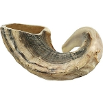 Traditional Half Polished Ram Horn Shofar - 33-35.5 cm / 13-14 inch
