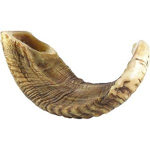 Natural Ram's Horn Shofar - 19-20 inches Rare