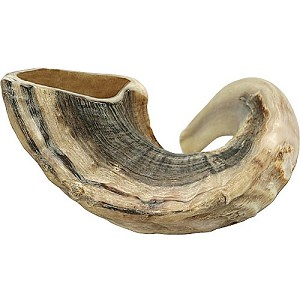 Traditional Half Polished Ram Horn Shofar